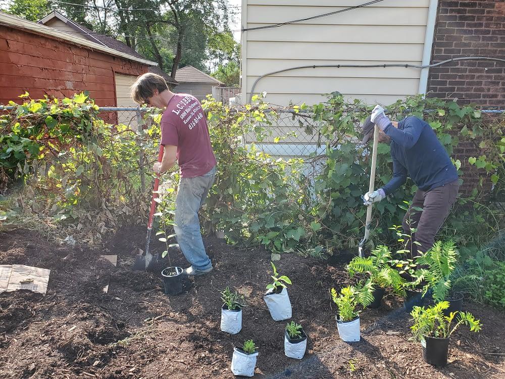 Planting more Perennials