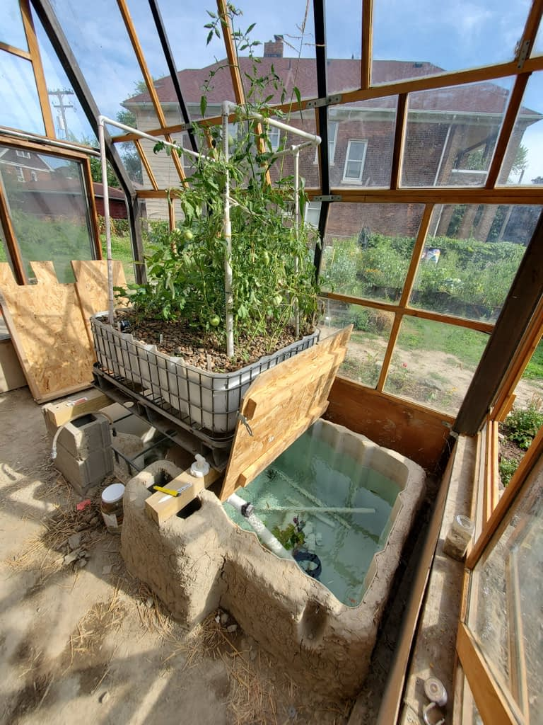 Tomatoes, Basil, Corn in the Aquaponic System